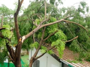 Damaged tree on top of a house which should be removed by a tree service provider