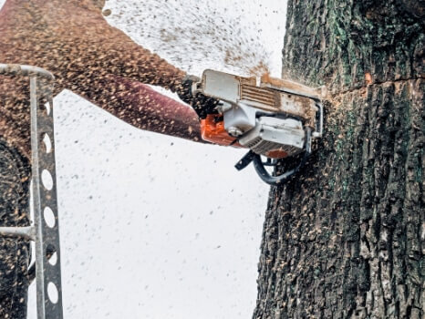 Tree felling performed by a tree surgeon in Hull in a cherry picker