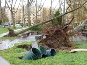 A storm created a lot of damage with trees fell over and garbage bins in holes in the ground