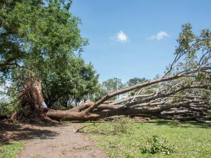 A fallen tree on a sand road to be removed by a storm damage cleaning service