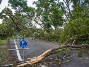 Damaged and fallen tree on a road