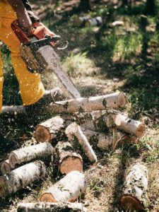An arborist cleaning a removed tree by sawing it into piecesi