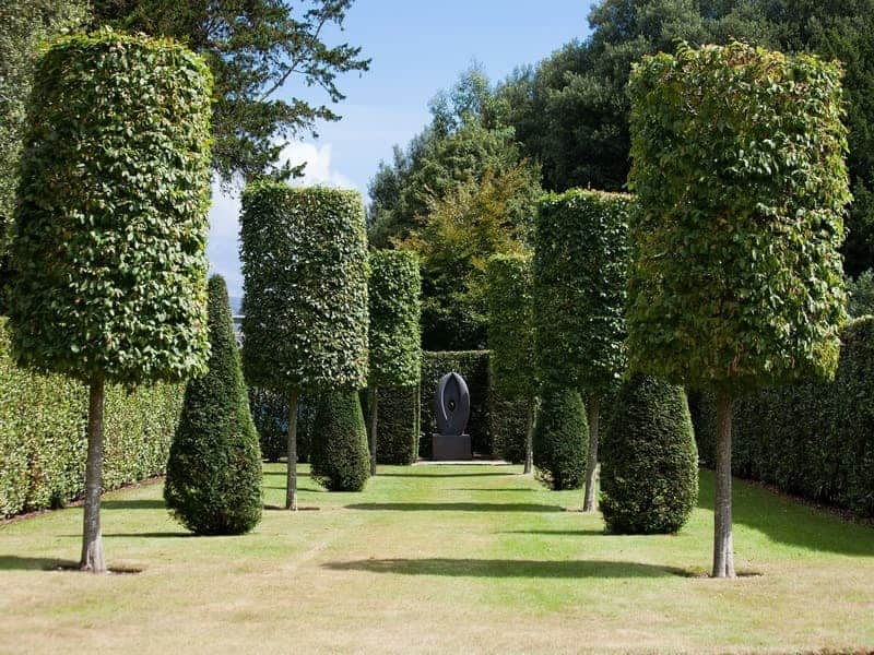 Trees and shrubs in a row, which are trimmed in nice shapes