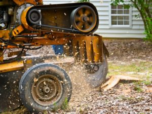 A tree stump being grinded away by a yellow stump removal vehicle