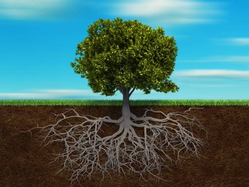 A graphic showing a tree and its roots under the soil